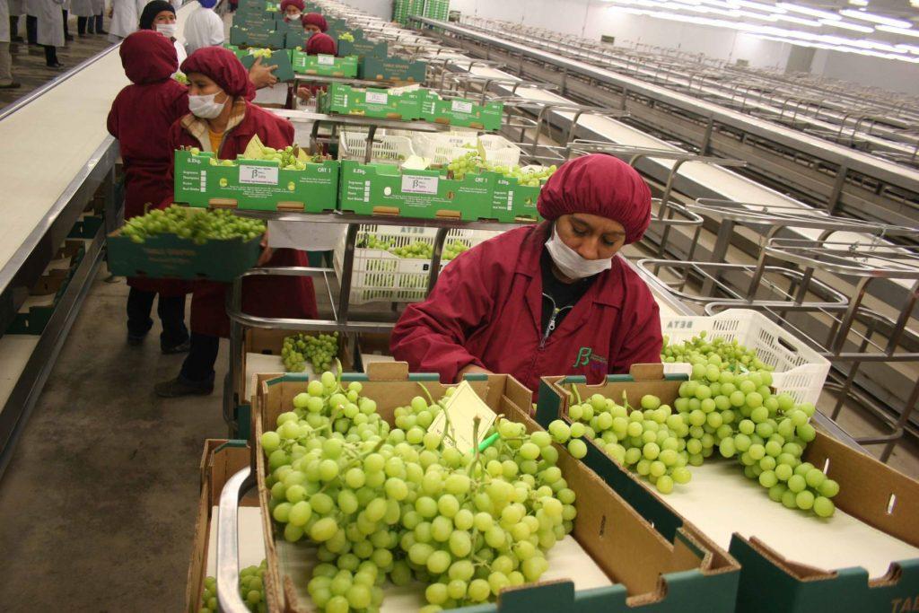 exportacion uva